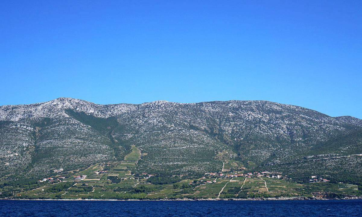 Vineyards on the Dalmatian Coast. Photo credit Sarah Stodola.
