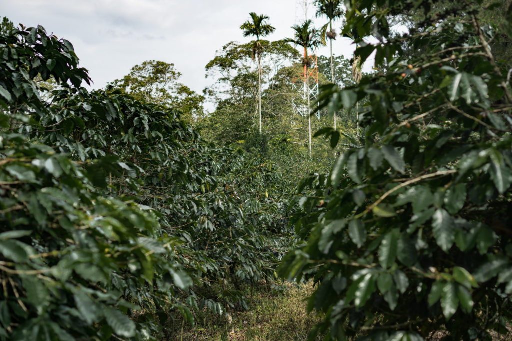 In Search of a Decent Cup of Coffee in Sumatra | Flung